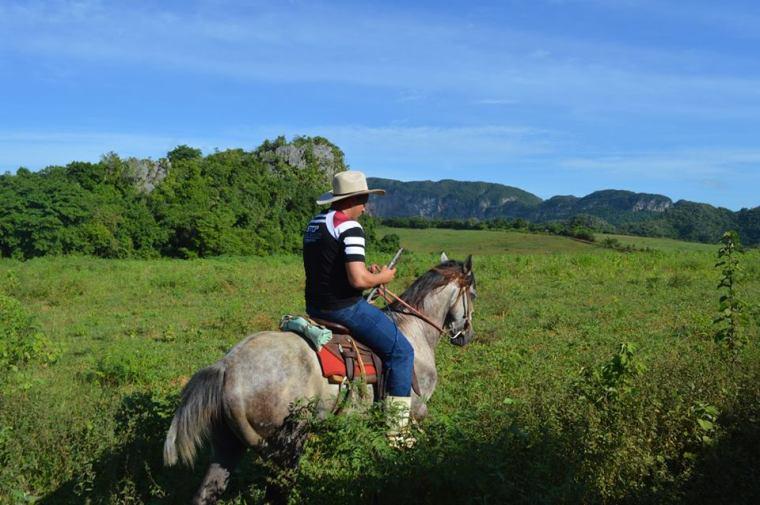 vinales_caballo